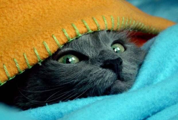Приколы про кошек фото