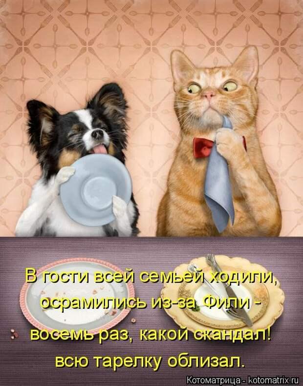 1474017274_kotomatricy-13
