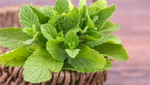 10 ароматных растений, которые можно выращивать у себя на подоконнике