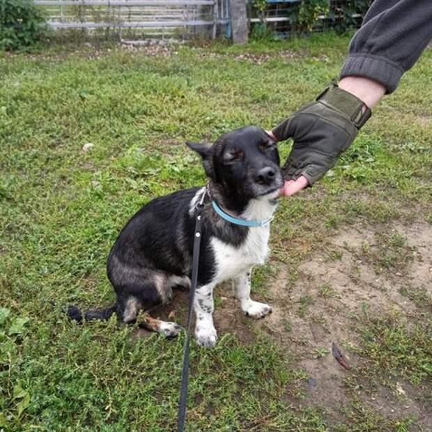 В аэропорту Домодедово нашли потерявшуюся неделю назад собаку Еву. Она вышла на запах хозяйки