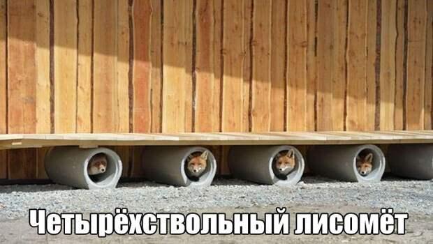 1471555173_subbota-13