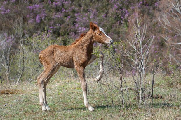 Грациозные лошади! Факты и красота в авторских фотографиях