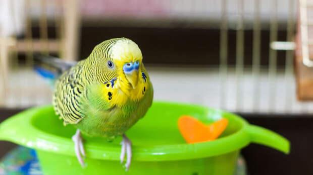 Ванночка для мелких птиц с игрушкой. Фото: Shutterstock