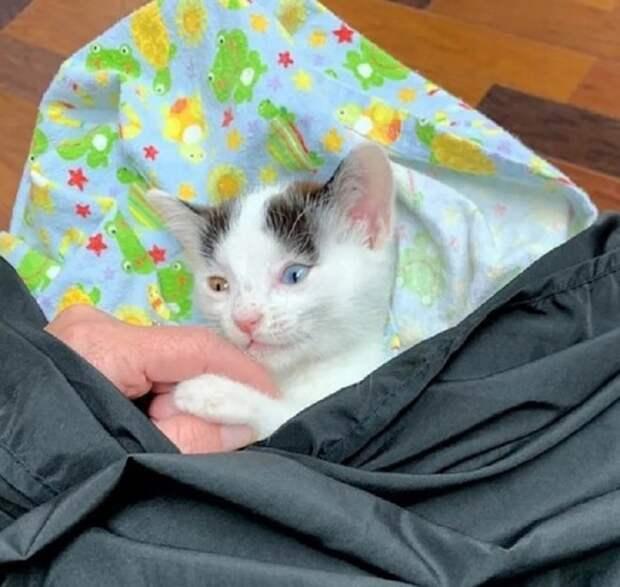 Особенный котенок с разноцветными глазами терпеть не может одиночества и учится быть собой