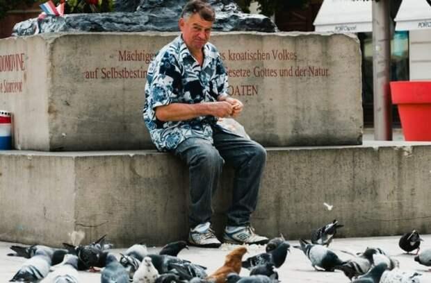 Крылатые крысы: как этично решить проблему городских голубей