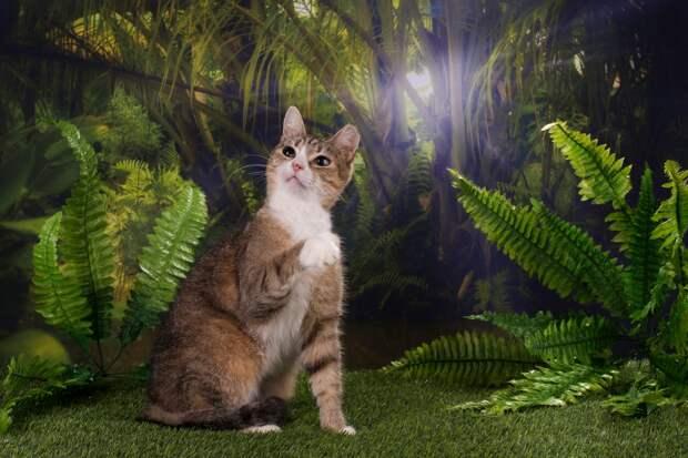 Приглашаем на Зоошоу-2016! Самая большая выставка домашних животных!