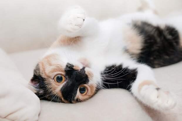 Спящие на постели хозяина кошки чаще заболевают COVID-19