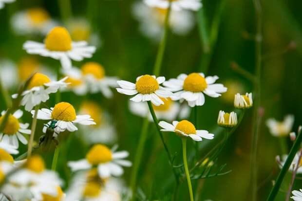 Для красоты издоровья: 5 растений, которые нужно успеть собрать изасушить доконца лета