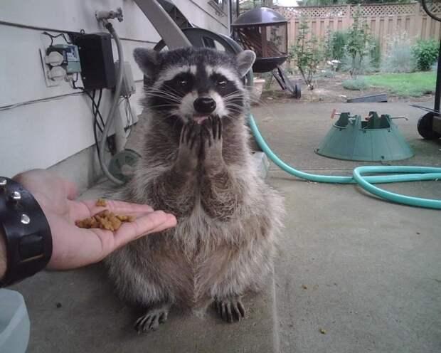 Божечки, это все для меня? животные, забавно, неожиданно, нужный момент, подборка, природа, фото, юмор