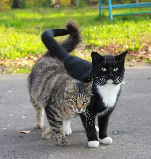 Кошкин кот