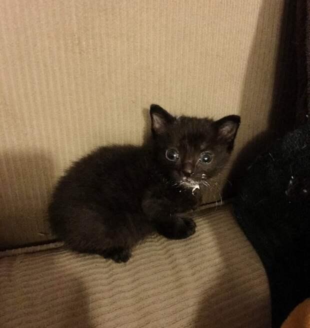 Старый приютский кот взял под свое крыло спасенного малыша история, история спасения, коты, котята, кошки, мило, спасение животных, трогательно