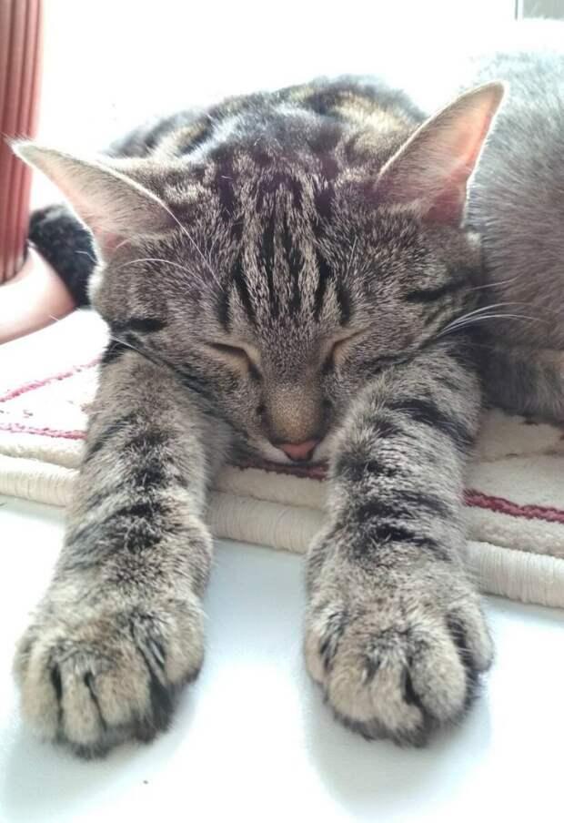 Истощенную кошку нашли на трассе, измазанной в мазуте