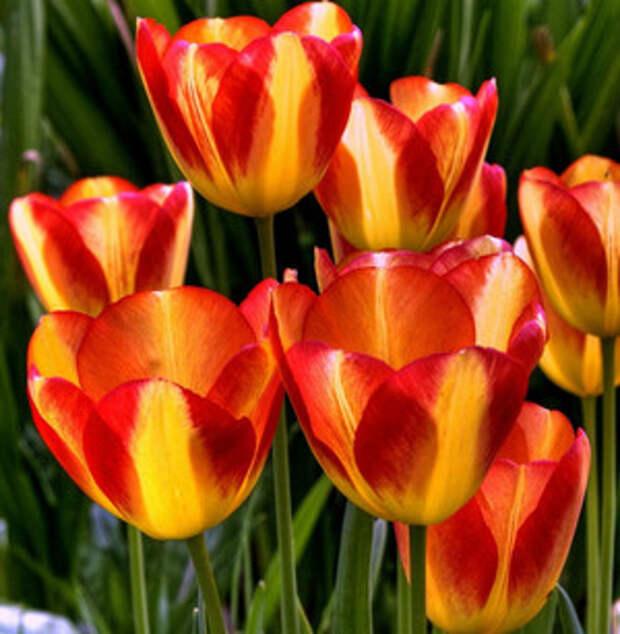 Фото №6 - 10 растений для ленивых садоводов