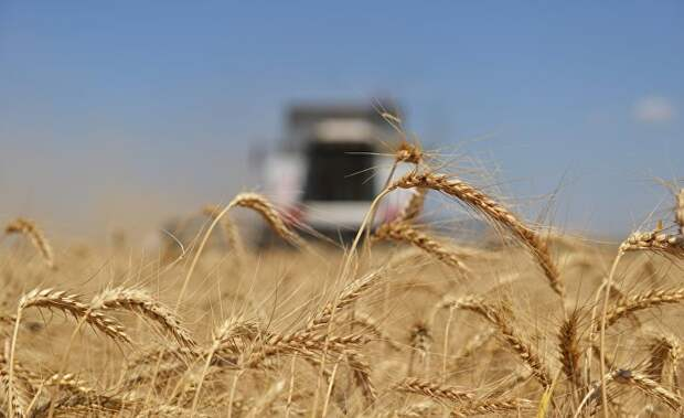 The National Interest (США): станет ли пшеница оружием России, пока мир борется с коронавирусом?