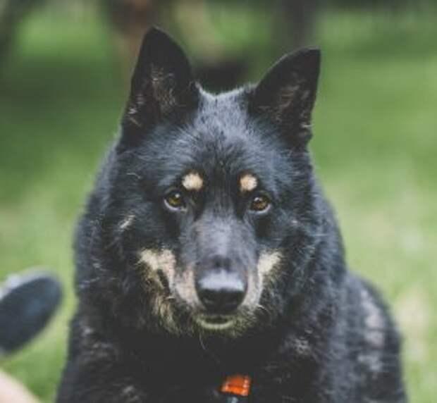 Волонтеры зооприютов в СВАО ищут хозяев бездомным собакам