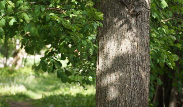Стало известно, когда уберут дерево, упавшее нажилой дом вПетрозаводске