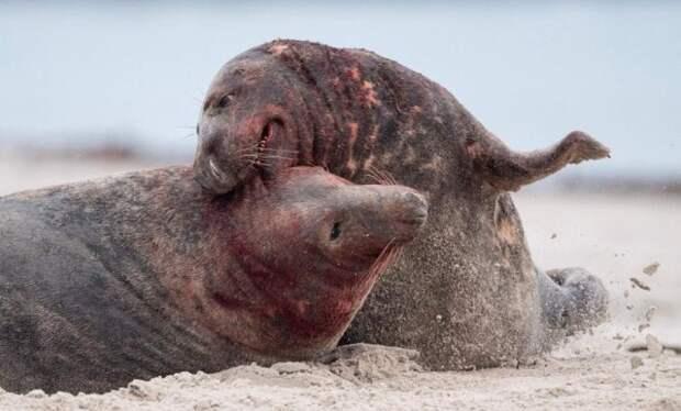 Лучшие фотографии животных прошлой недели (13 фото)