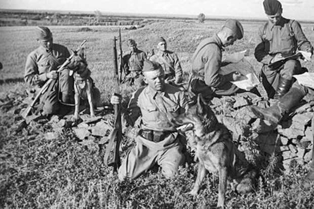 Мощная операция ВВС Красной армии в мае 1943. Месть за разбитые аэродромы в июне 1941