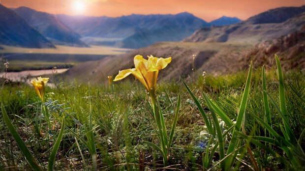 Горный Алтай (фото)