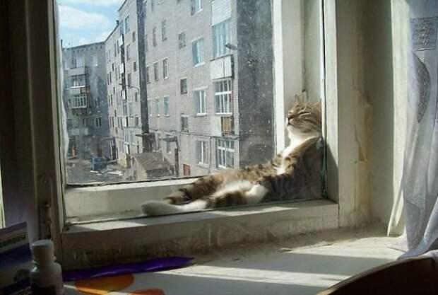 Такое теплое солнышко... животные, котики, лучи, погреться, солнечные ванны, солнце, температура, тепло