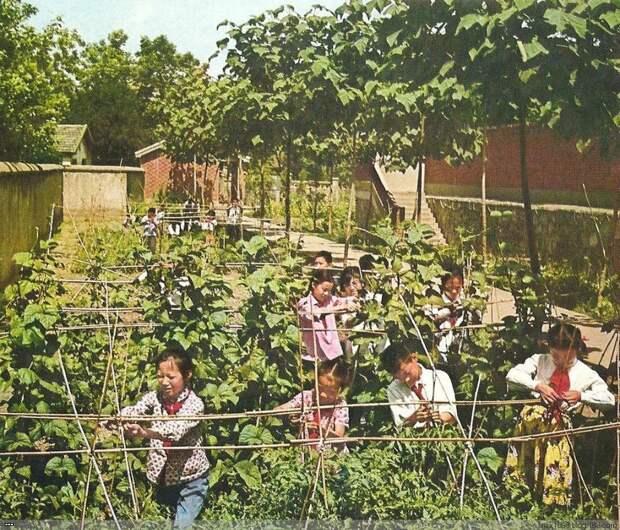 Китайская народная республика 1974 год