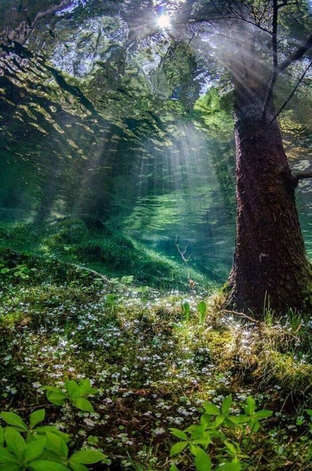 Подводный лес или мираж?