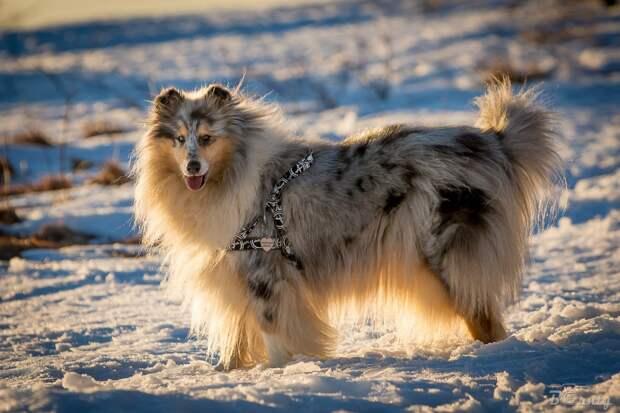 Учёные из Финляндии выявили самые агрессивные породы собак