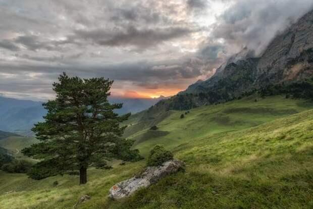 Ингуши и чеченцы не поделили границу, в результате пострадали экологи