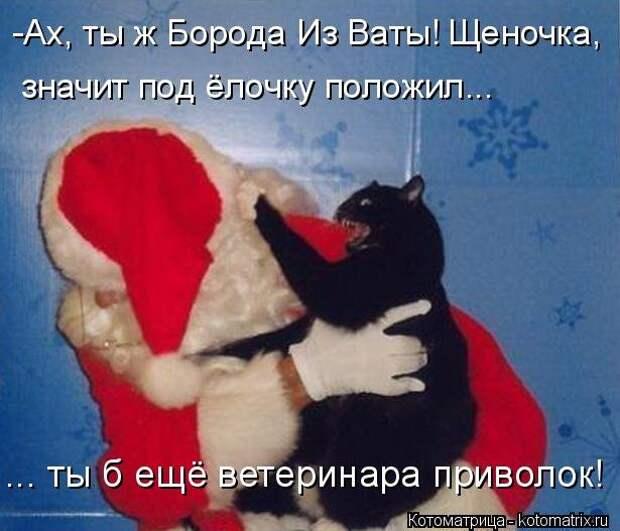 1451737511_kotomatricy-9