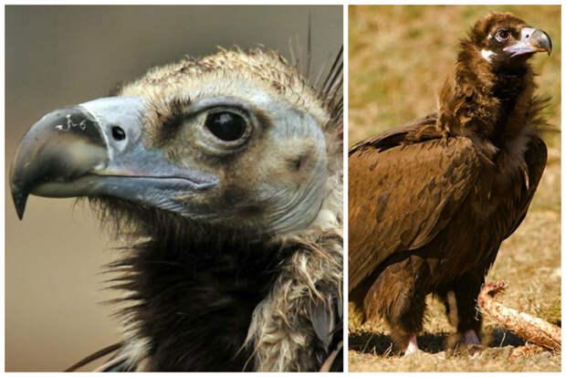 Самые крупные птицы мира