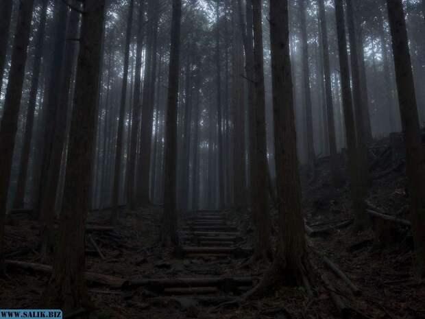 В глухом лесу