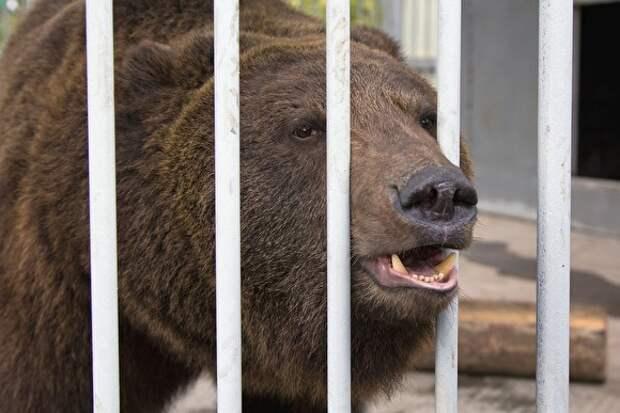 В Якутии медведь растерзал экс-депутата