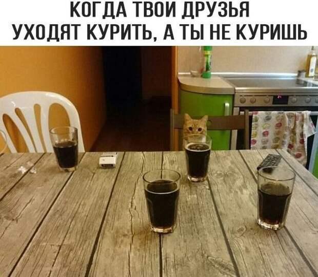 Смешные картинки с надписями со смыслом (11 фото)