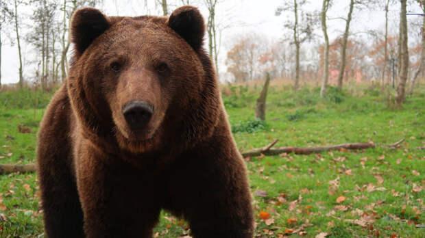 Жители видели медведей в районе пропажи омского министра