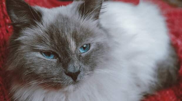 Истощённая беременная кошка звала людей на помощь, сидя в подвале