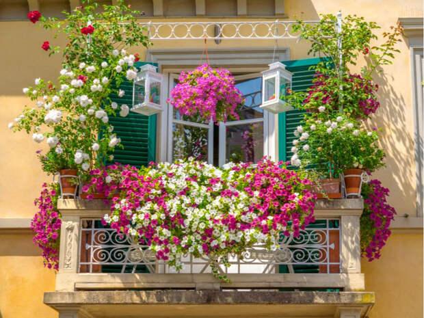 Чилл-зона, оранжерея или рабочий кабинет: как обустроить балкон