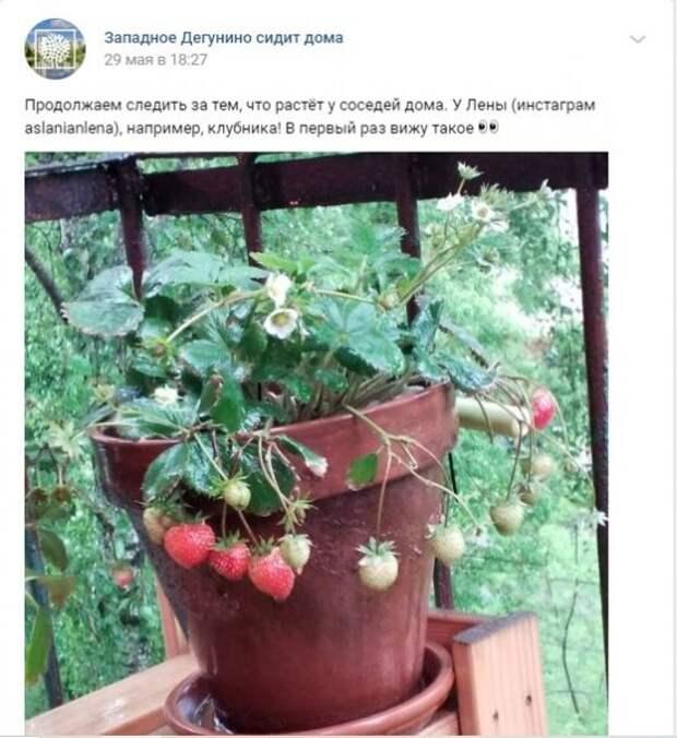 Огород на балконе: жители района Западное Дегунино рассказали, что выращивают дома