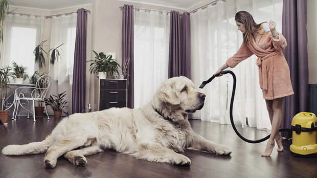 Способы избавления квартиры от запаха собаки