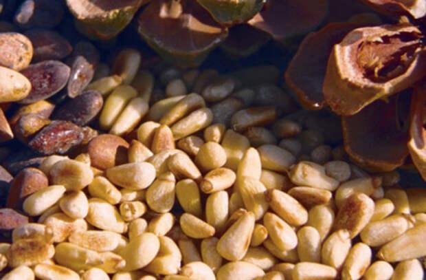 Кедровые орешки полезны для  сердца