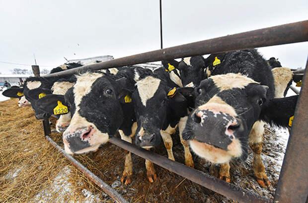 Порядок регистрации кормовых добавок предлагают изменить