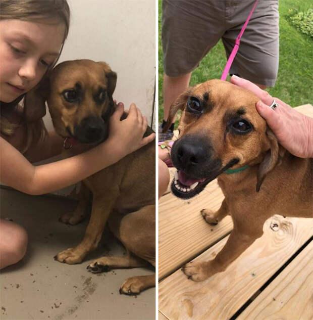 9 трогательных фото собак до и после того, как им нашли хозяев