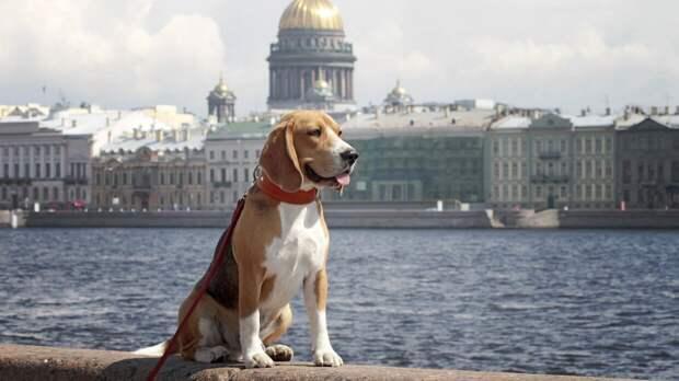 Владельцев собак предостерегли от оставления питомцев у магазинов