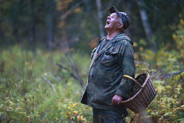 Россиян заставляют арендовывать лес