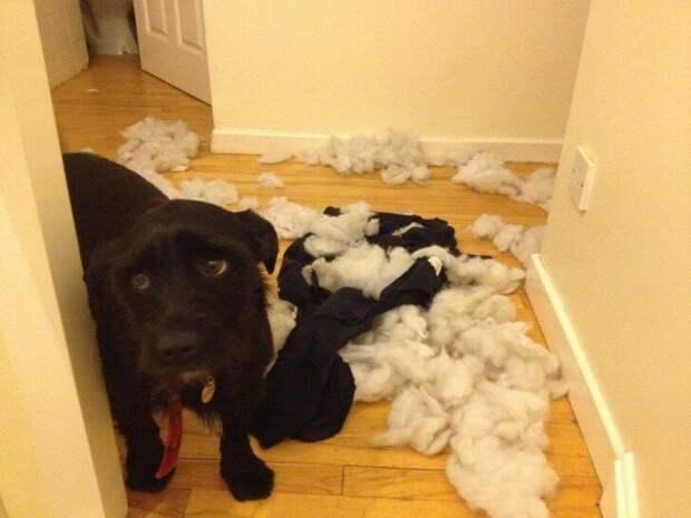 Это правда была твоя любимая игрушка? врасплох, кошки, смешные, собаки, фото, шкодники