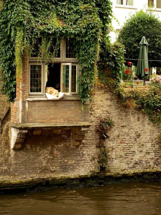 Жизнь в Брюгге, Бельгия животные, жизнь, мир, роскошь, собака, удобство, фото
