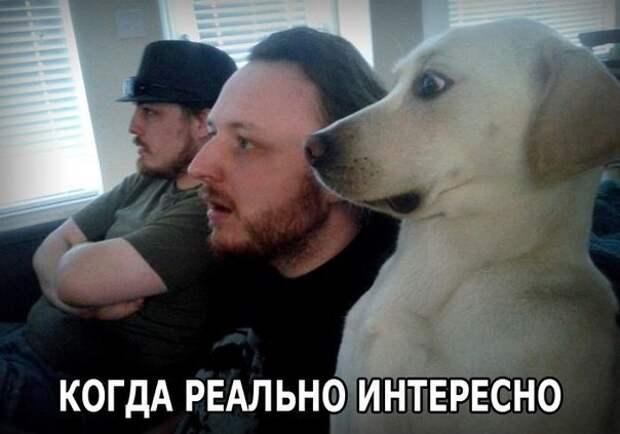 """Кто сказал """"Мяу""""?"""