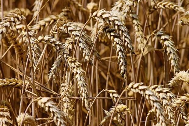 В Крыму собрали около миллиона тонн зерна