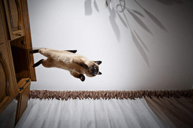 Как кошка семье жизнь спасла, или присмотрись к своей кошке, она есть оружие. Рассказ на основе реального случая
