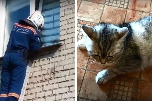 В Новосибирске кошка застряла задней лапой в окне — видео, на котором её вызволяют спасатели