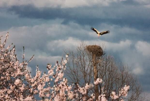 Уже больше похоже на весну, но ветрено - погода ближайших дней.